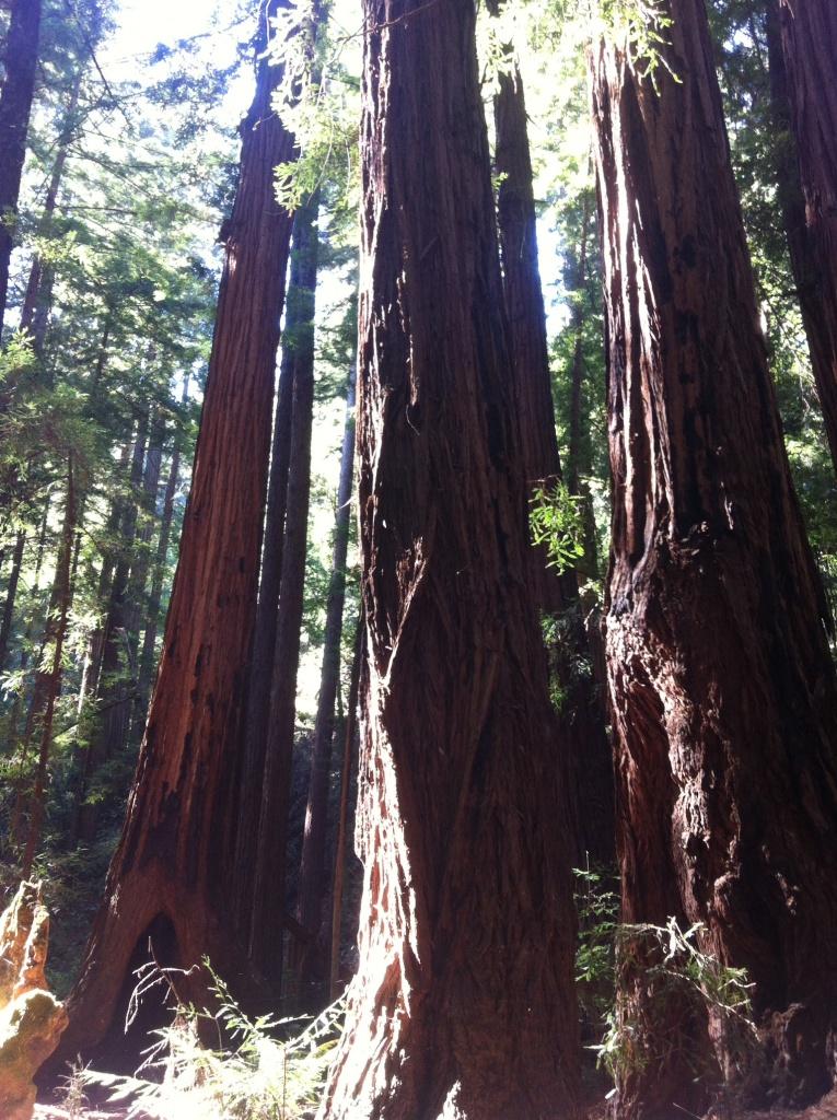 Journelles_Reise_Kalifornien_San_Francisco_Muir_Woods_2